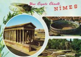 Une Cigale Chante - Nîmes - Nîmes