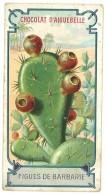 Chromo Chocolat Aiguebelle - Figues De Barbarie ( Cactus ) - Aiguebelle