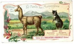 Chromo Chocolat Aiguebelle - Le Monde Des Mammifères - Amérique Du Sud, Ruminants Rongeurs, Lama, Viscache - Aiguebelle
