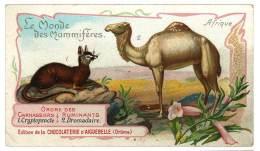 Chromo Chocolat Aiguebelle - Le Monde Des Mammifères - Afrique, Dromadaire, Cryptoprocte - Aiguebelle