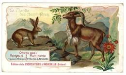 Chromo Chocolat Aiguebelle - Le Monde Des Mammifères - Afrique, Lièvre D'Ethiopie, Mouflon à Manchettes - Aiguebelle