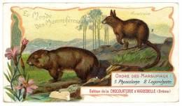 Chromo Chocolat Aiguebelle - Le Monde Des Mammifères - Australie, Lagorcheste, Phascolome Mineur Ou Wombat - Aiguebelle
