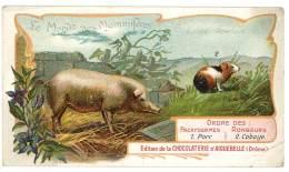 Chromo Chocolat Aiguebelle - Le Monde Des Mammifères - Europe, Amérique, Porc, Cobaye - Aiguebelle