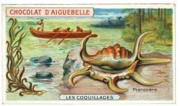 Chromo Chocolat Aiguebelle - Les Coquillages, Ptérocère - Aiguebelle