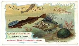 Chromo Chocolat Aiguebelle - à Travers Les Flots - Le Monde Sous-marin - Oursin Commun, Rémora ... - Aiguebelle