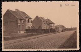 APPELS ( Deelgemeente Dendermonde ) - Hoogte - Geanimeerde éditie Meskens - Non Classés