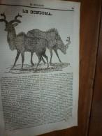 1834 LM :Condoma(animal);Armes De Sièges(baliste,catapulte,bélier,etc);Tombeau De VIRGILE;Hôtel Du Lord-Maire à LONDRES - Vieux Papiers