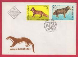 206199 / 1977 FDC - ANIMAL Carnivores , Red Fox (Vulpes Vulpes) Golden Jackal (Canis Aureus) Bulgaria Bulgarie Bulgarien - FDC