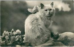 CHAT Blanc Avec Yeux En Relief - Cats