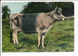 Carte  ( Format 15 X 10 Cm ) A Jersey Cow ( Vache )  ( Recto Verso ) - Jersey