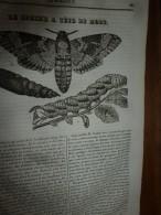 1834 LM : SPHINX A Tête De Mort; Tombeau Des Rois D'ARAGON; L'ANGE De MER (poisson); CLOVIS - Vieux Papiers