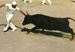 Corrida Toros / Méjanes Camargue - Corrida