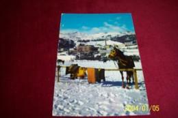 THEME   °°  LE CHEVAL - Horses