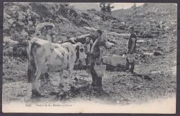 SWITZERLAND  , KILCHBERG  , FARM  ANIMALS ,  OLD  POSTCARD - ZH Zurich