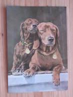 Hund001: Zwei Dackel - Two Badgers Deux Basserts - Ungelaufen - Gut Erhalten - Hunde