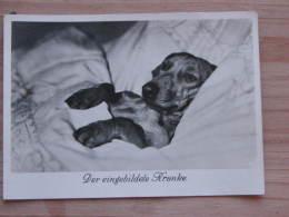 Hund006 : Dackel - Der Eingebildete Kranke - Ungelaufen - Gut Erhalten - Hunde