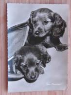 """Hund010 : Dackel -  """"Die Neugierigen!"""" - Ungelaufen - Gut Erhalten - Hunde"""