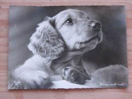 """Hund012 : Dackel - """"Nimm Mich Mit!"""" - Popp-Karte 966  - Ungelaufen - Gut Erhalten - Hunde"""