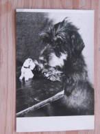 Hund017 : Dackel - Foto-Handabzug - Ungelaufen - Gut Erhalten - Hunde