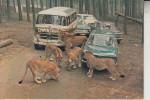5135 SELFKANT - TÜDDERN, Safariland, Löwen - Lions - Heinsberg
