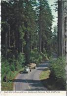 VS. Lady Bird Johnson Grove, Redwood National Park, California. 2 Scans - Andere