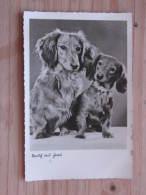 """Hund026 : Dackel Pärchen - """"Strolch Und Frau"""" -  Ungelaufen - Gut Erhalten - Hunde"""