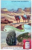 Chromos Veritable Extrait De Viande Liebig    ( La  Flore  Dans  Les  Deserts   ) (  De  Libye  ) - Liebig