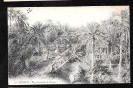 Tozeur - Vue D'ensemble Des Palmiers  - Haw95 - Túnez