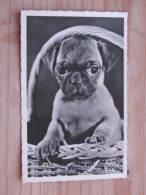 """Hund036 : Dackel - """"Unser Jüngster Im Korb"""" - Ungelaufen - Gut Erhalten - Hunde"""