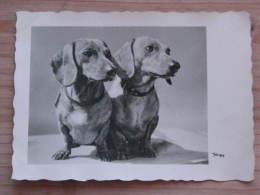 Hund036 : Zwei Dackel - Popp-Karte - Ungelaufen - Gut Erhalten - Hunde