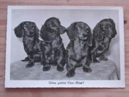 """Hund039 : Vier Dackel - """"Wem Gehört Dein Herz?"""" - Ungelaufen - Gut Erhalten - Hunde"""