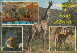 Kenia  East Afrika - Wildlife - 2x Nice Stamps - Kenia