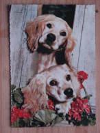 Hund063 : Hunde -  Dackel Blick Durch Zaun  - Col. Ansicht -  Ungelaufen - Gut Erhalten - Hunde