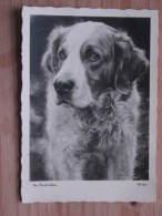 """Hund073 : Hund  - """"Der Beschützer"""" - Popp-Karte - Echte Photographie - Ungelaufen - Gut Erhalten - Hunde"""