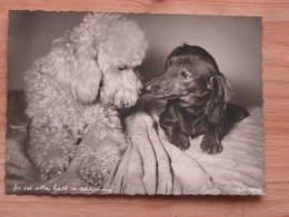 """Hund101 : Dackel Und Pudel - """"Es Ist Alles Halb So Schlimm"""" - Popp-Karte Nr. 1324 - Ungelaufen - Gut Erhalten - Hunde"""