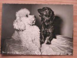 """Hund102 : Dackel Und Pudel - """"Dein Ist Mein Ganzes Herz"""" - Popp-Karte Nr. 1398 - Ungelaufen - Gut Erhalten - Hunde"""