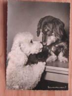 """Hund103 : Dackel Und Pudel - """"Einverstanden"""" - Popp-Karte Nr. 1349 - Ungelaufen - Gut Erhalten - Hunde"""