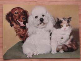 Hund104 : Dackel Und Pudel Und Katze - Col. Ansicht - Popp-Karte Nr. FF 133 - Ungelaufen - Gut Erhalten - Hunde