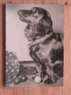 Hund108 : Dackel - Langhaardackel - Popp-Karte Nr. 1684 - Ungelaufen - Gut Erhalten - Hunde