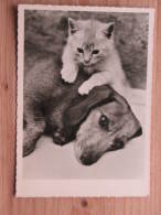 Hund120 : Dackel - Mit Kleiner Katze - DEFOT Foto  - Unbeschrieben - Gut Erhalten - Hunde
