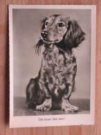 """Hund126 : Dackel - """"Ich Kann Treu Sein !"""" - Gunkel Foto  - Unbeschrieben - Gut Erhalten - Hunde"""