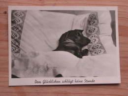 """Hund129 : Dackel Im Bett - """"Dem Glücklichen Schlägt Keine Stunde !"""" - Jofie Foto  - Unbeschrieben - Gut Erhalten - Hunde"""