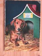 Hund170 : Dackel Im Stroh Vor Seiner Hütte - Cecami 288 - Kodak - Farbfoto - Unbeschrieben - Sauber Erhalten - Hunde