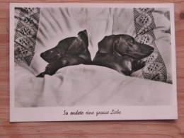 """Hund201 : Dackel-Paar Im Bett """"So Endete Eine Grosse Liebe"""" - Jufie Nr. H 5328 - Unbeschrieben - Gut Erhalten - Hunde"""