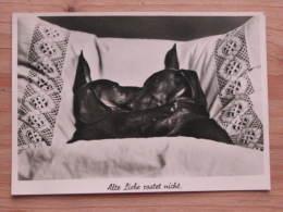 """Hund204 : Zwei Dackel Im Bett - """"Alte Liebe Rostet Nicht"""" Jofie Nr. H 5340 - Unbeschrieben - Gut Erhalten - Hunde"""