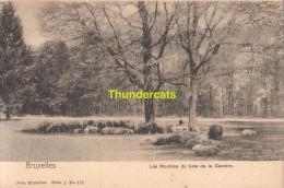 CPA BRUXELLES NELS SERIE 1 No 171 LES MOUTONS DU BOIS DE LA CAMBRE - Forêts, Parcs, Jardins