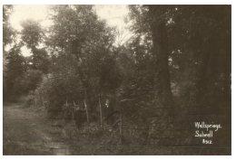 (123) Very Old Postcard - Carte Ancienne - UK - Wellspring Solwell - Alberi