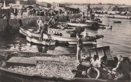 GHAZAOUET  ( Nemours ) - Retour De Pêche ( Unique Sur Le Site ) - Autres Villes