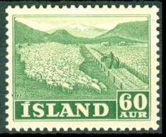 ISLAND 1950 Sheep Breeding 60 AUR, XF MVLH - Farm