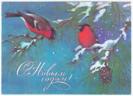 Russia USSR 1985 Happy New Year, Bonne Annee, Gluckliches Neujahr, Bird Birds Eurasian Bullfinch Gimpel - 1923-1991 USSR